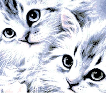Котки19