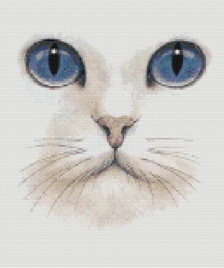 Котки34