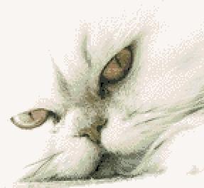 Котки35