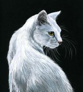 Котки36