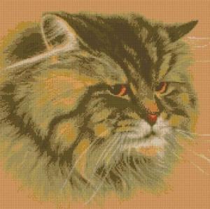 Котки48