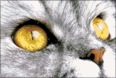 Котки54