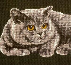 Котки55