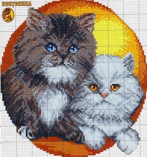 Котки60
