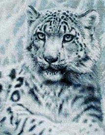 Котки61