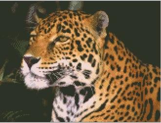 Котки63