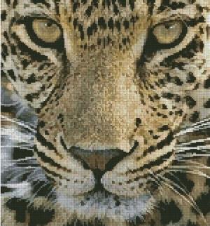 Котки64